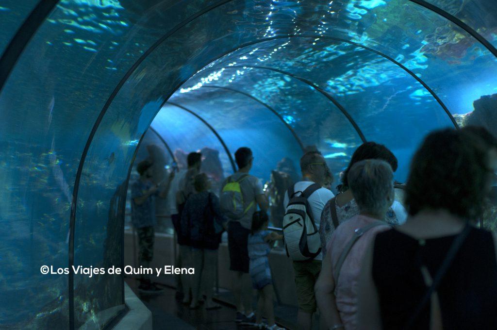 Paseando entre por el túnel