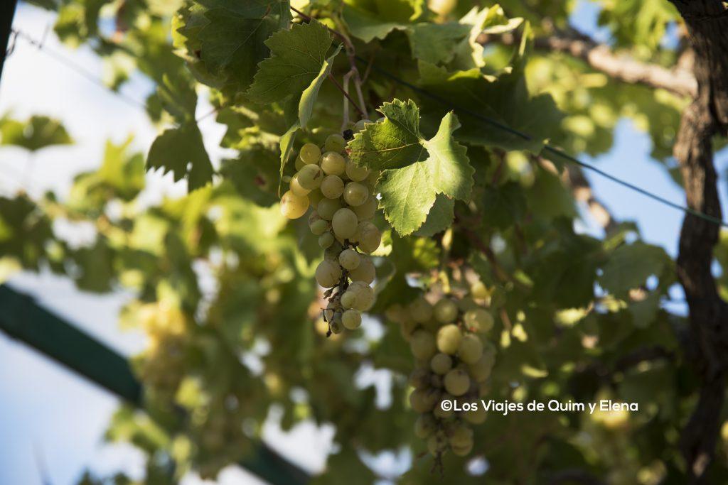 Uvas en el parque