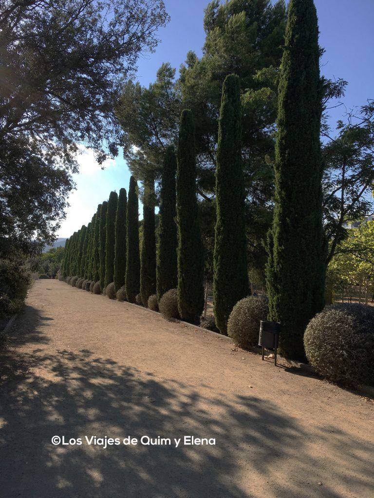 Camino de cipreses de entrada al parque