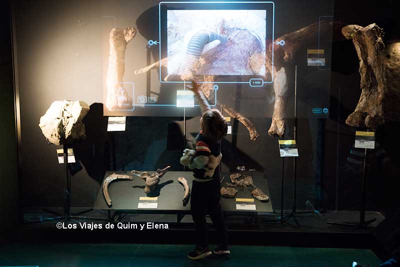Éric en el Museo paleontológico
