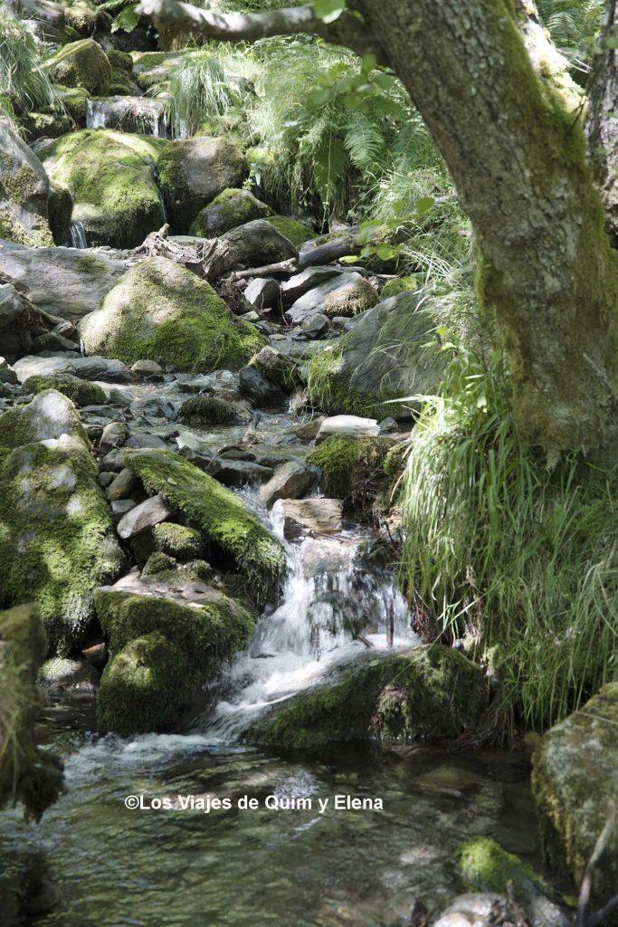 El bosque de Carlac es precioso