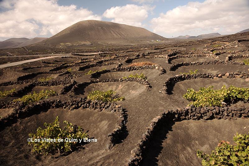 Cultivos de Vid en Lanzarote