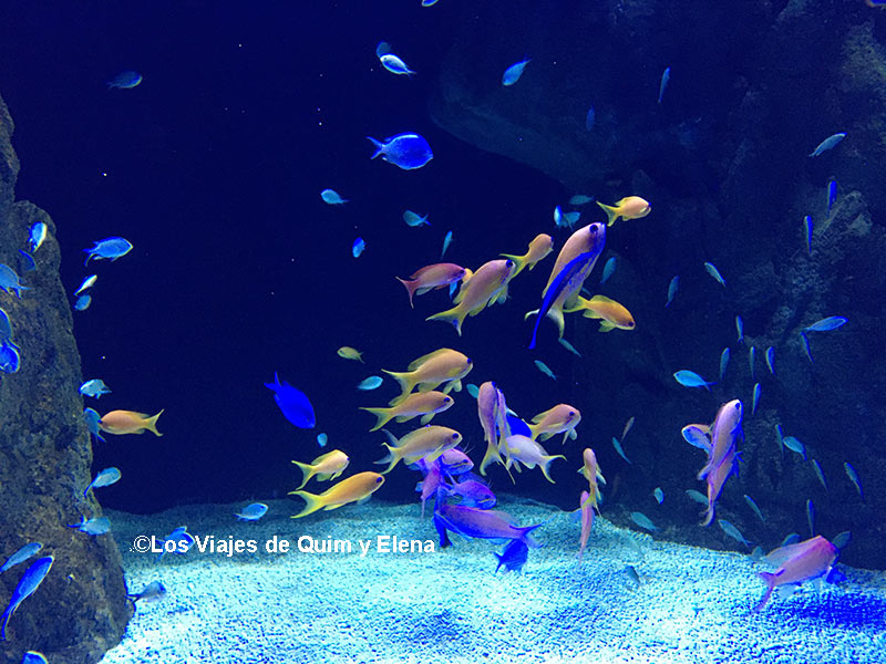 Uno de los acuarios de Atlantis Aquarium
