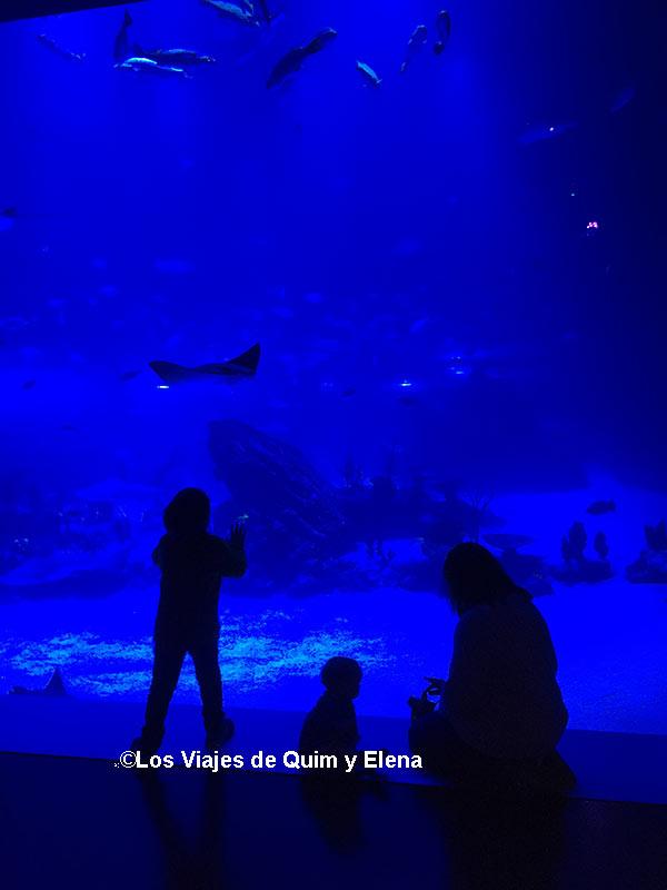 El gran acuario