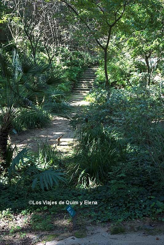 Camino en la otra zona del jardín