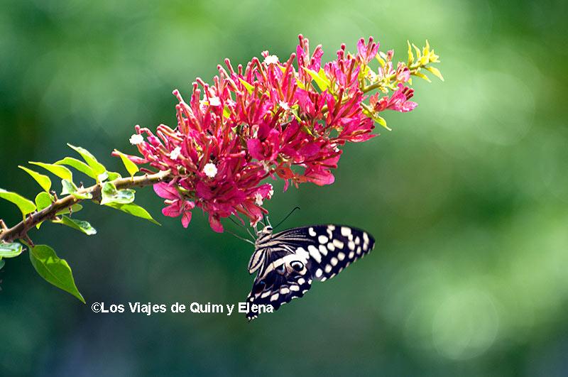 Macro de una mariposa en Cabo Verde